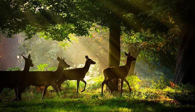 Nandankanan_wildlife_photography_1