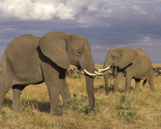 african-elephant-hd-wallpaper
