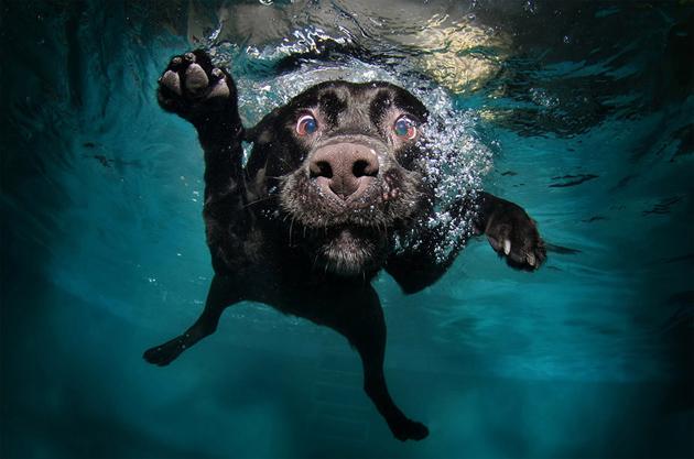 Beautiful Dog Photography (1)