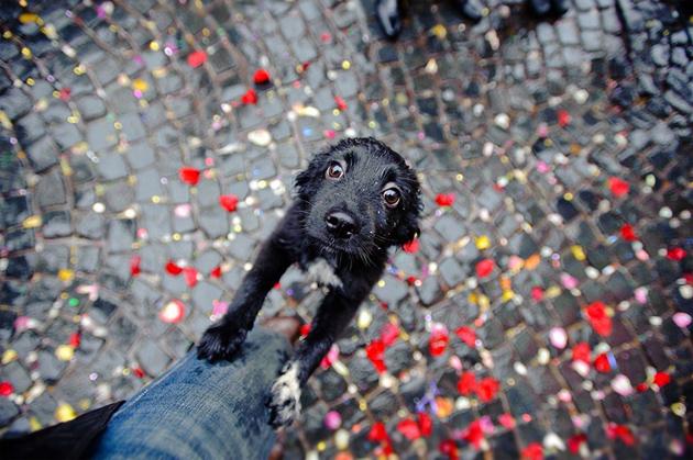 Beautiful Dog Photography (10)