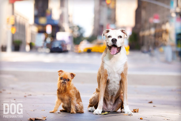 Beautiful Dog Photography (12)