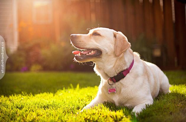 Beautiful Dog Photography (13)