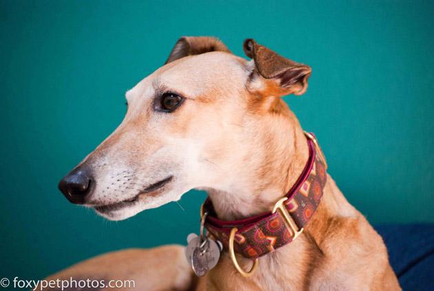 Beautiful Dog Photography (14)