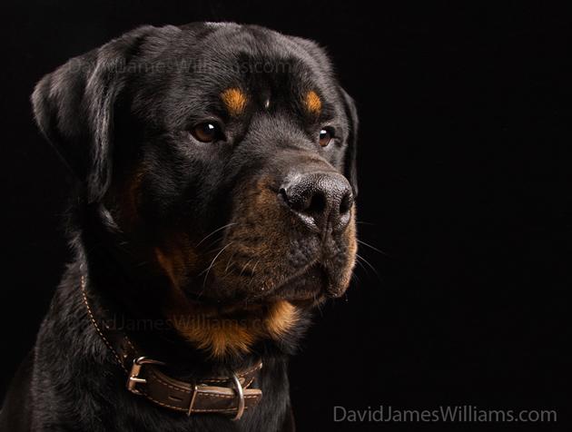 Beautiful Dog Photography (15)