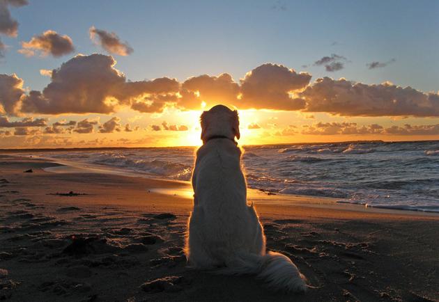 Beautiful Dog Photography (2)