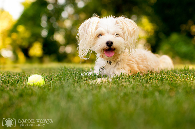 Beautiful Dog Photography (21)