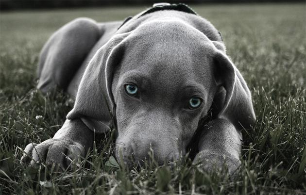 Beautiful Dog Photography (26)