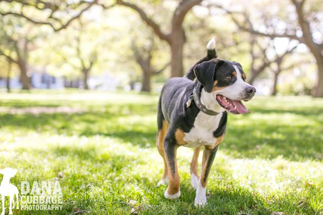 Beautiful Dog Photography (27)