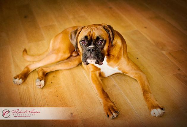 Beautiful Dog Photography (3)