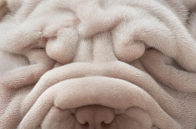 Beautiful Dog Photography (6)