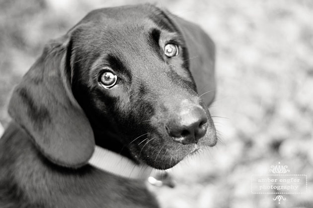 Beautiful Dog Photography (7)
