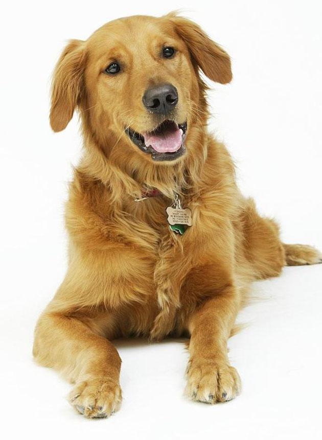 Beautiful Dog Photography (8)