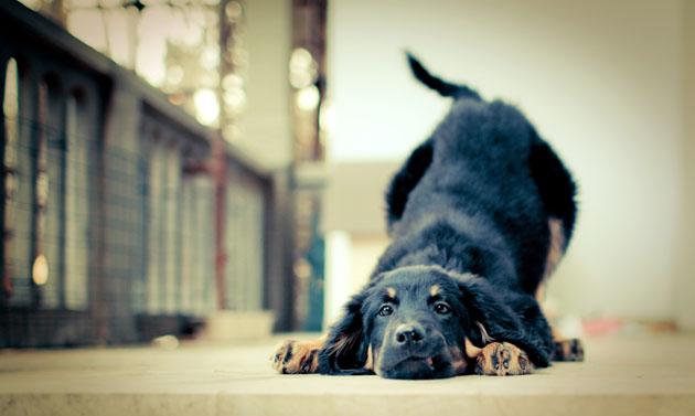 Beautiful Dog Photography (9)