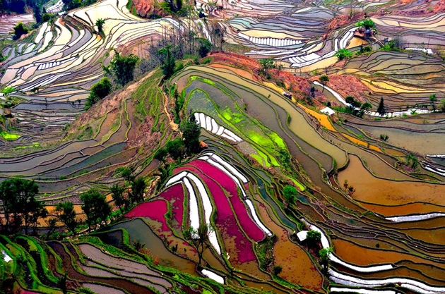 colorful-rice-fields-of-china