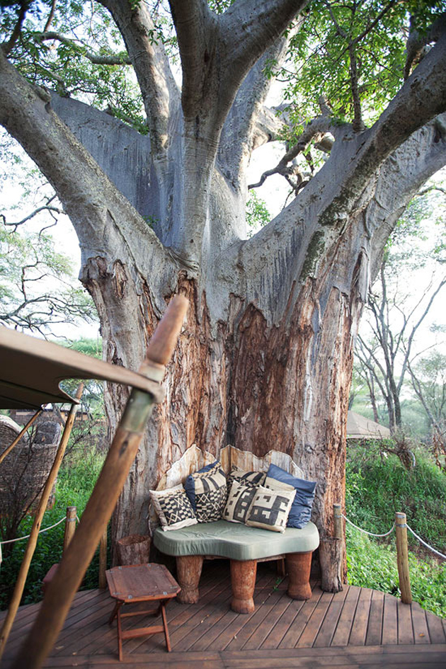 perfectly-formed-nook-of-a-large-tree