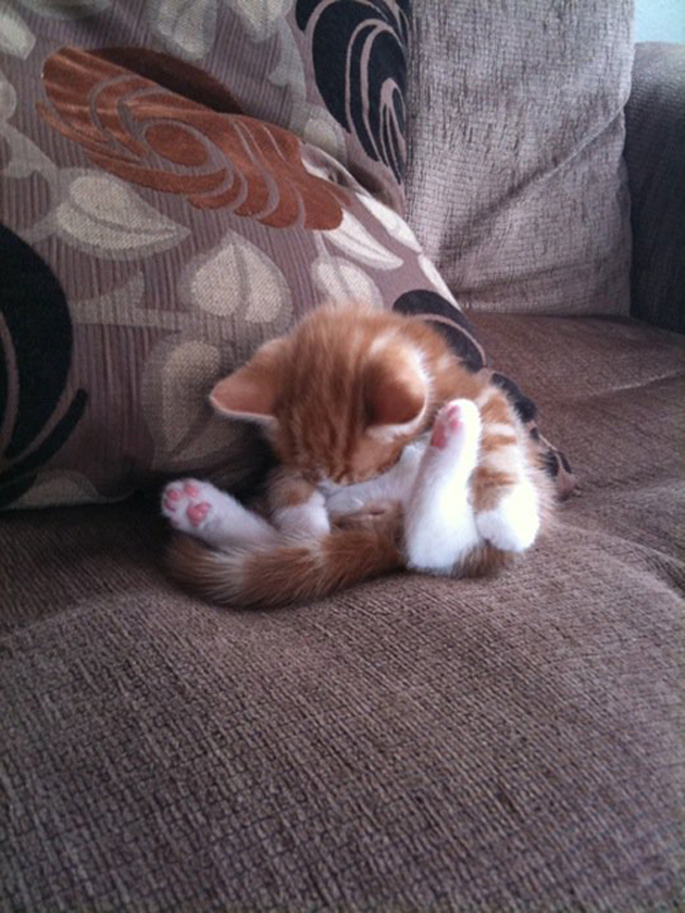 21 Cute Sleeping Cat Pictures (11)