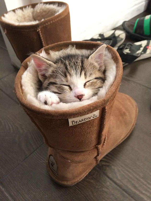 21 Cute Sleeping Cat Pictures (13)