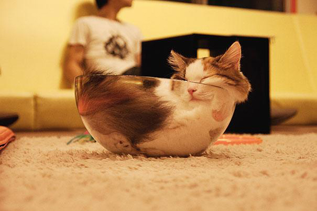 21 Cute Sleeping Cat Pictures (14)