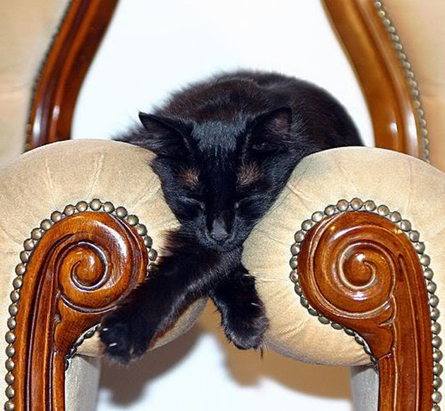 21 Cute Sleeping Cat Pictures (18)