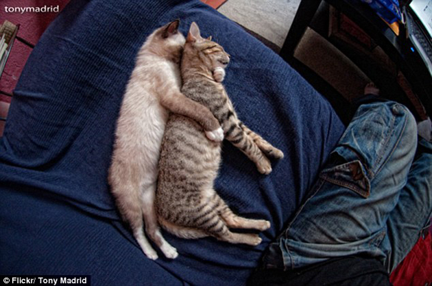 21 Cute Sleeping Cat Pictures (3)