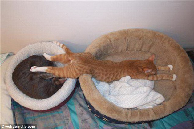 21 Cute Sleeping Cat Pictures (4)