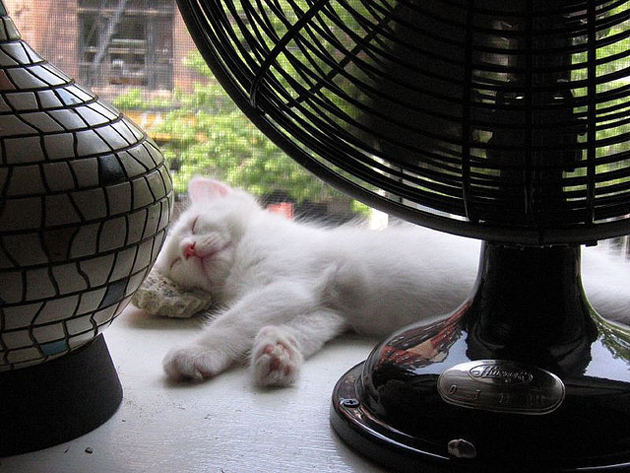 21 Cute Sleeping Cat Pictures (8)