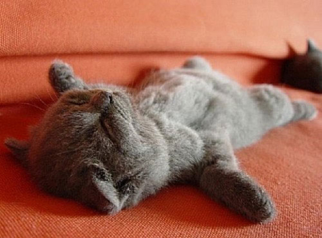 21 Cute Sleeping Cat Pictures