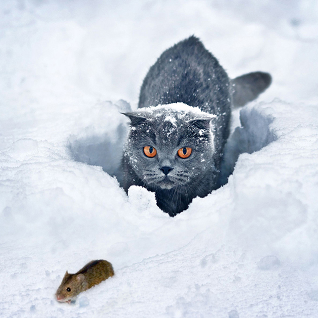 Funny cat photographs that blows your mind-An-animal-hunting1