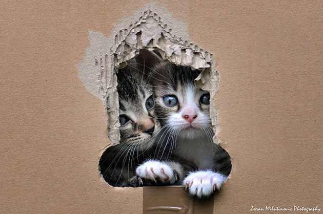 Funny cat photographs that blows your mind-Box-break