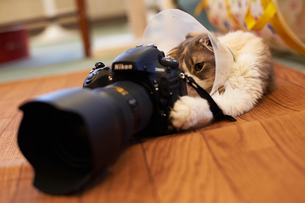 Funny cat photographs that blows your mind-CameraNyan