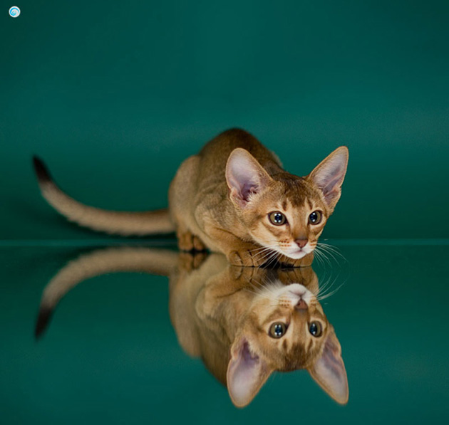Funny cat photographs that blows your mind-Clymene-Wonderlife-LT