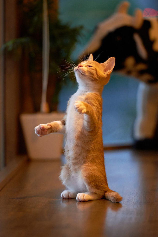 Funny cat photographs that blows your mind-Conductor