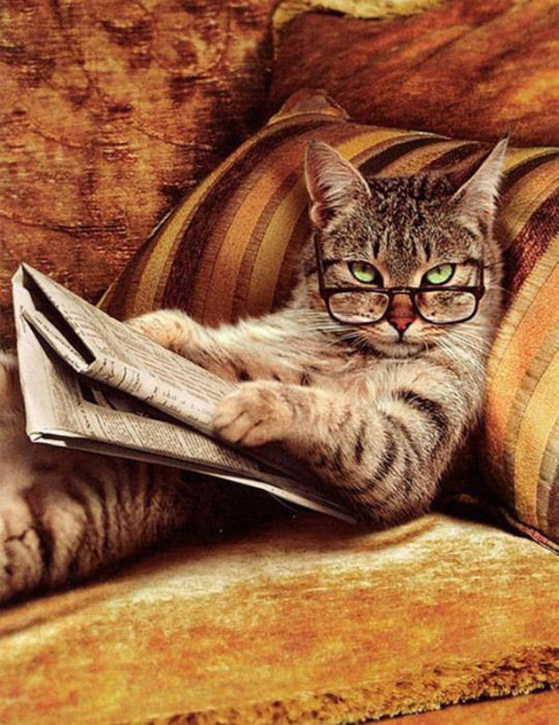 Funny cat photographs that blows your mind-Cute-Cats-Wearing-Glasses