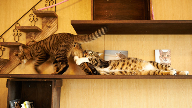Funny cat photographs that blows your mind-I-have-to-go