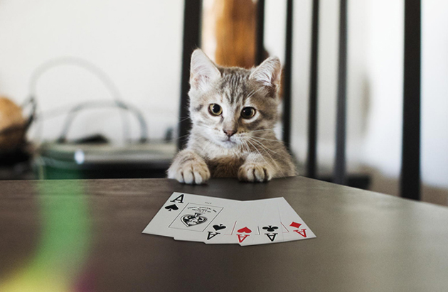Funny cat photographs that blows your mind-Maggie-poker-face