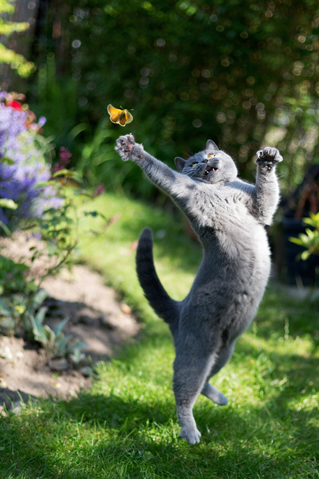 Funny cat photographs that blows your mind-Miss