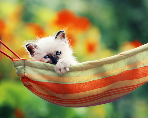 Funny cat photographs that blows your mind-in-the-hammock