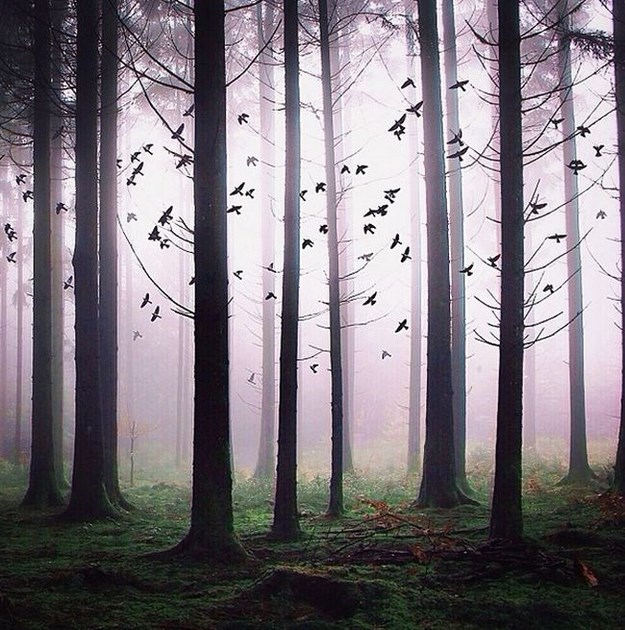 Surreal Photo Manipulation by Robert Jahns's (14)