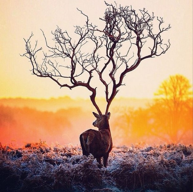 Surreal Photo Manipulation by Robert Jahns's (2)