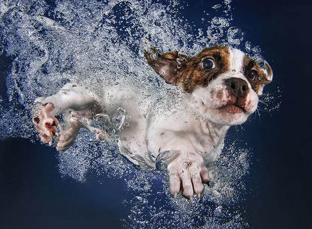 Stunning Underwater Puppy Photography By Seth Casteel (10)