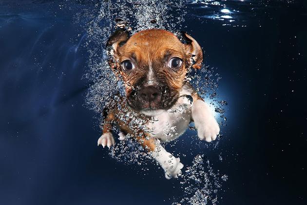 Stunning Underwater Puppy Photography By Seth Casteel (3)