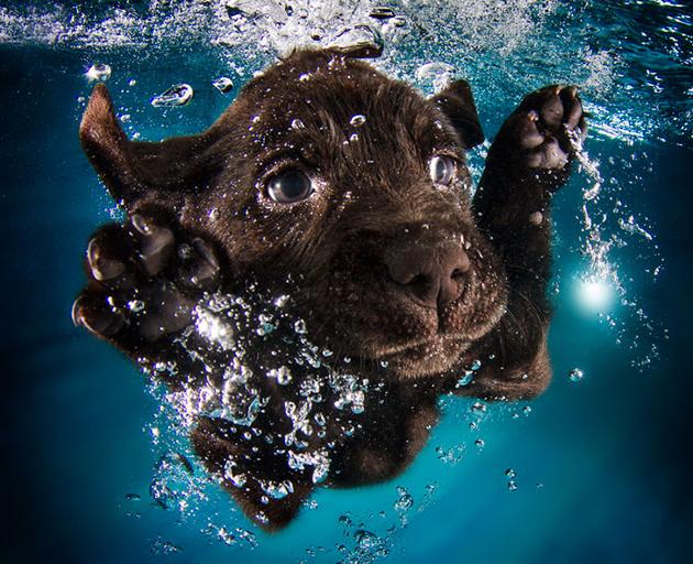 Stunning Underwater Puppy Photography By Seth Casteel (8)