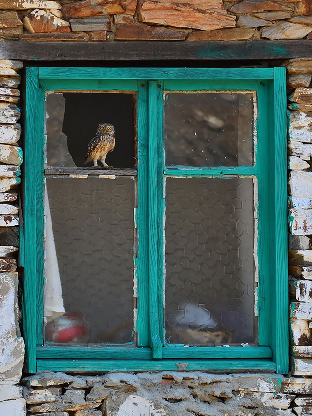 Fine-looking Photos of Animals Looking through Windows (1)