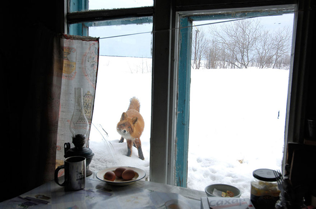 Fine-looking Photos of Animals Looking through Windows (11)