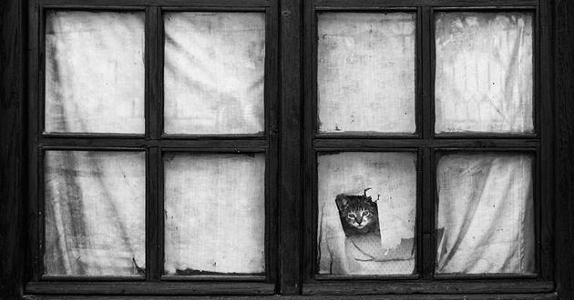 Fine-looking Photos of Animals Looking through Windows (15)