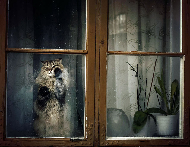 Fine-looking Photos of Animals Looking through Windows (16)