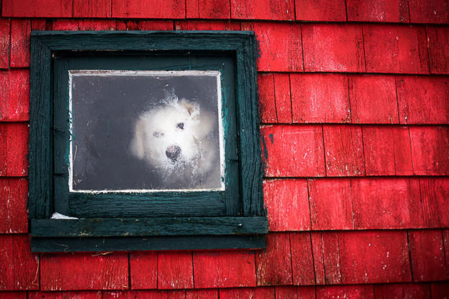 Fine-looking Photos of Animals Looking through Windows (18)