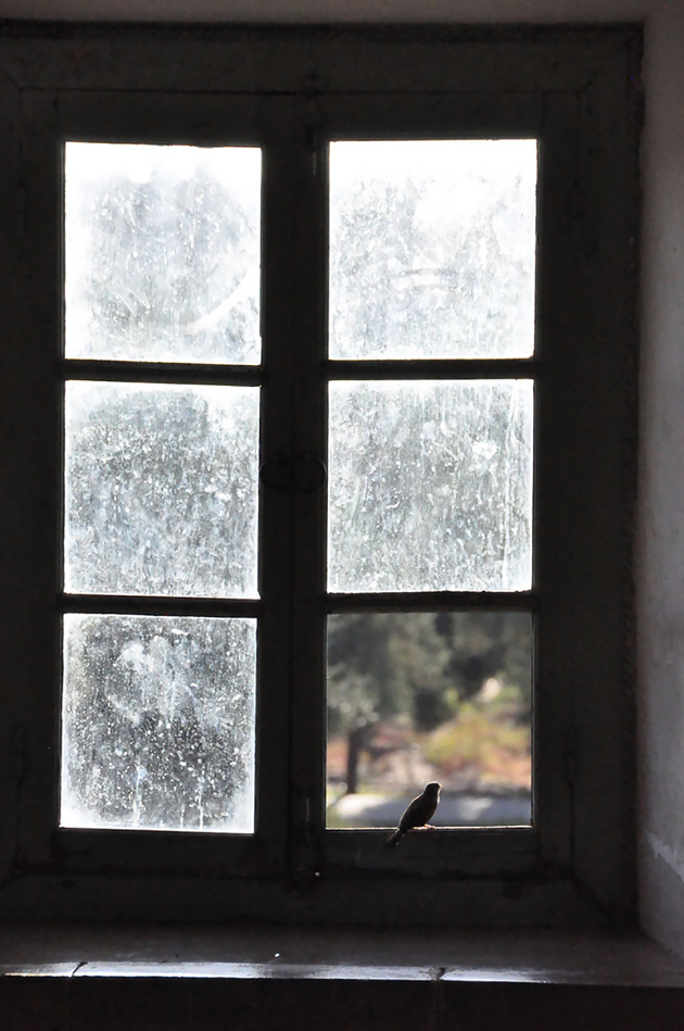 Fine-looking Photos of Animals Looking through Windows (3)