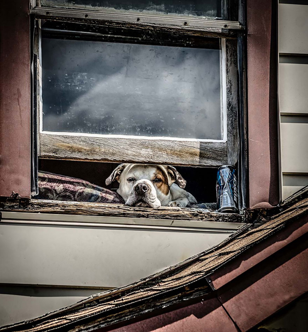Fine-looking Photos of Animals Looking through Windows (5)