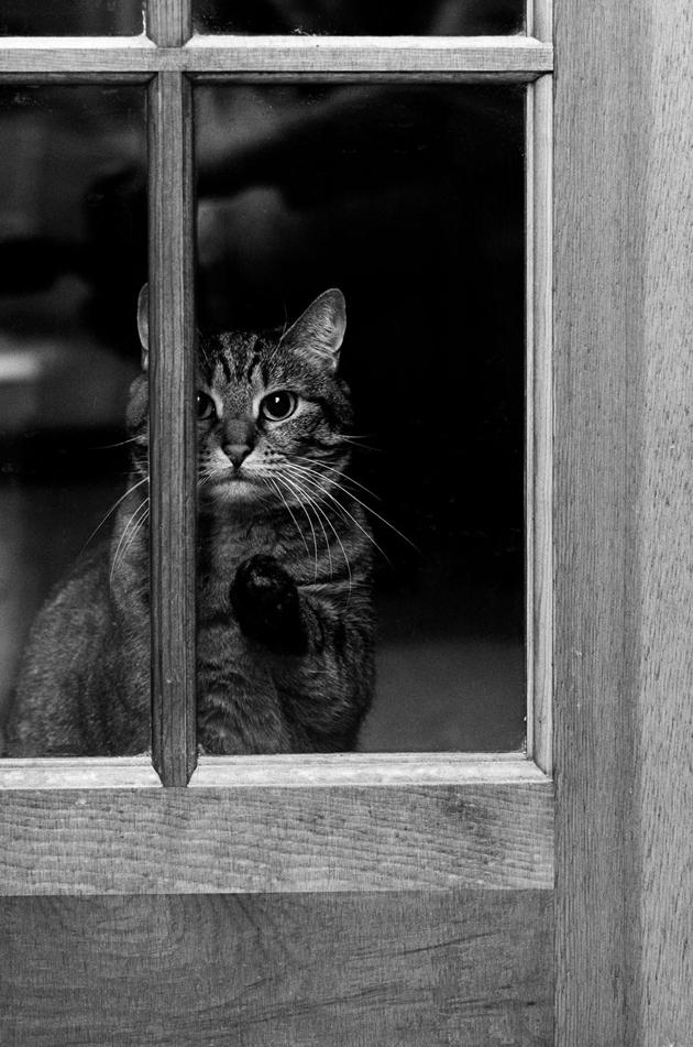 Fine-looking Photos of Animals Looking through Windows (6)